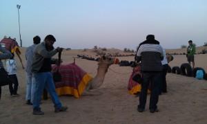 camel at rest