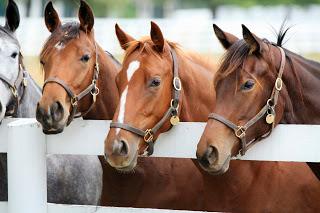 iStock - Horse